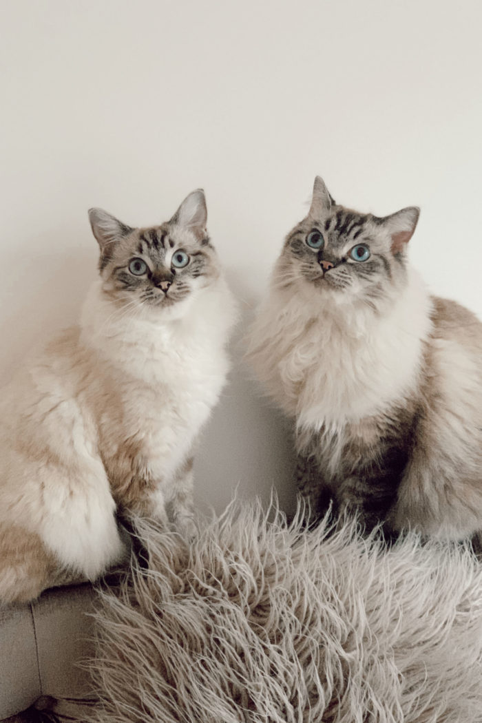 AD | Alfred & Penelope's Cat Quirks with Whiskas